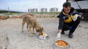Sokak hayvanlarına tıbbi destek