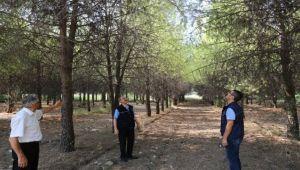 Ege'nin ormanlık alanları bakıma alınıyor