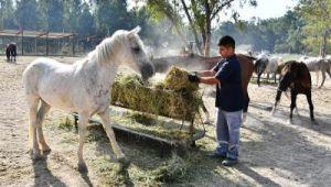 Faytonlardan alınan atlar İzmir Doğal Yaşam Parkı'nda