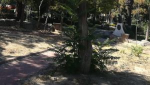 Kurumuş ağaçların yerine yenisi dikildi