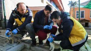 Buca'da uyuza karşı mücadele tam gaz