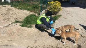 İzmir sokakta yaşayan hayvanları unutmadı