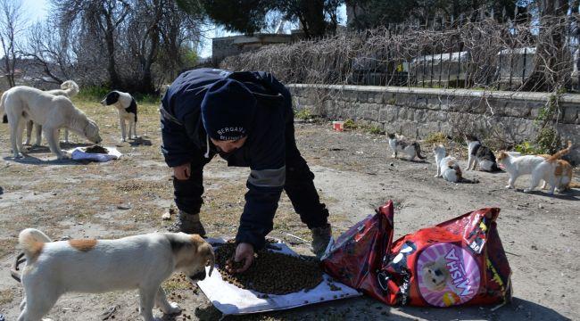 Bergama'da sokak hayvanlarına mama