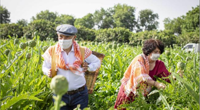 Başkan Soyer sırtında küfeyle enginar hasadına katıldı