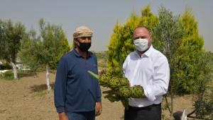 Çiftçiler Günü'nü Makamda Değil Tarlada Kutladı