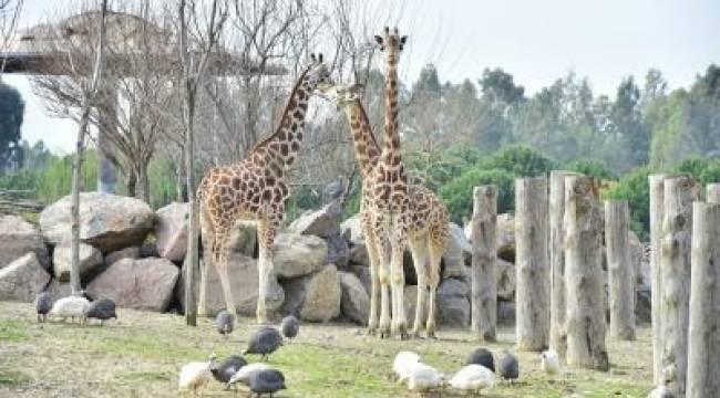 Sasalı Doğal Yaşam Parkı yeniden açılıyor