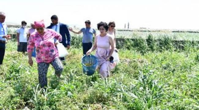 Büyükşehir'den istiridye mantarı üretimine destek