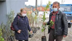 Buca'nın kırsal mahallelerine fidan desteği