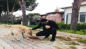 AK Parti'li Gençler Seferihisar'da Sokak Hayvanlarını Yalnız Bırakmadı