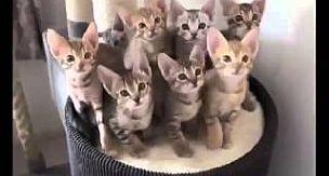 Kedilerin ne yaptığına bakın